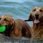 dogs-1642378_640