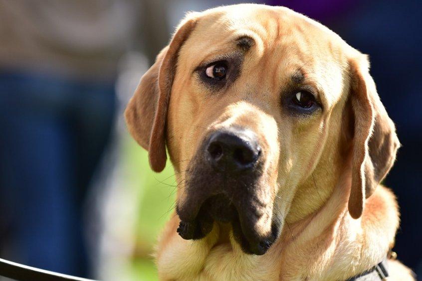 dog-1045257_960_720